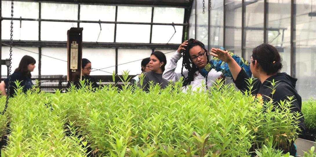 students looking at seedlings